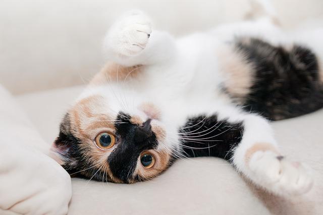 Porady o kotach