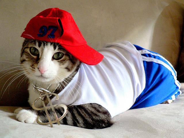 Blog o kotach Kocitata