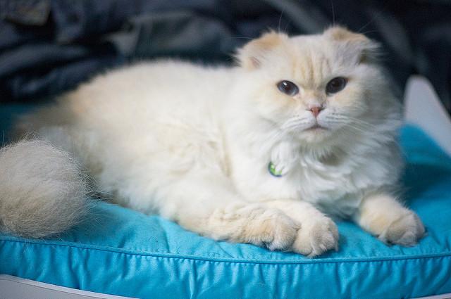 Blog o kotach