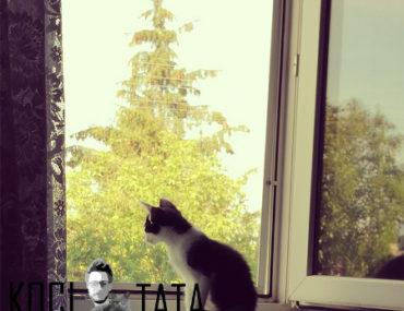 blog o kotach koci tata