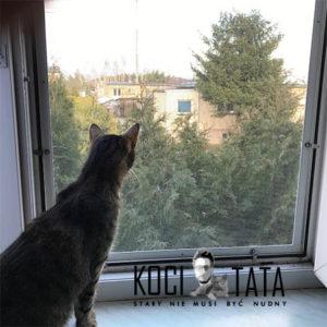 jak zabezpieczyć okno przed kotem