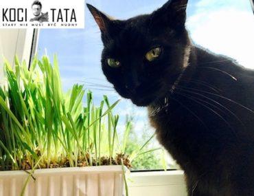 Dlaczego koty nie powinny jeść zbóż