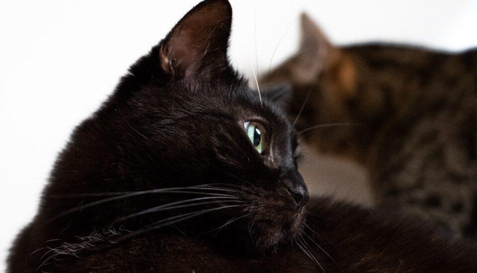 Kot, czy kotka