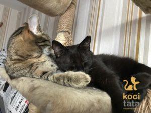 dwa koty