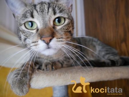 Czy koty są wredne?