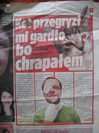 artykuł z gazety o kotach