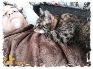mity o kotach