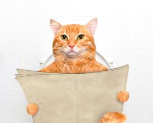 sikający kot