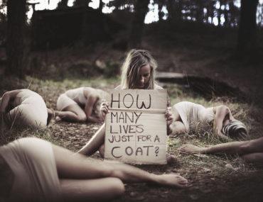 nowa ustawa o prawach zwierząt