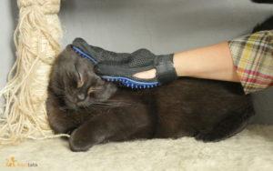 wyczesywanie kota rękawicą