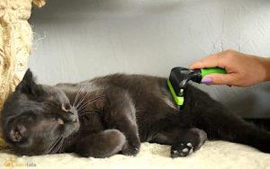Wyczesywanie czarnego kota furminatorem
