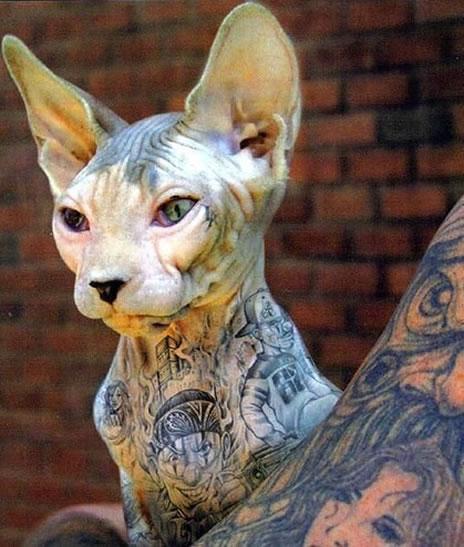 tatuaż na kocid
