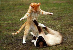 bijące się koty
