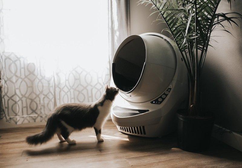 kuweta automatyczna dla kota