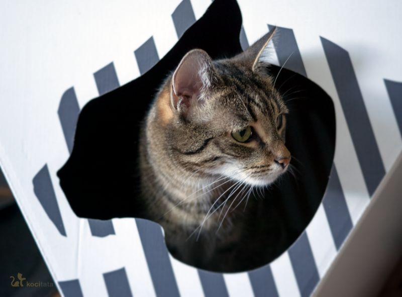 Aklimatyzacja kota w nowym domu